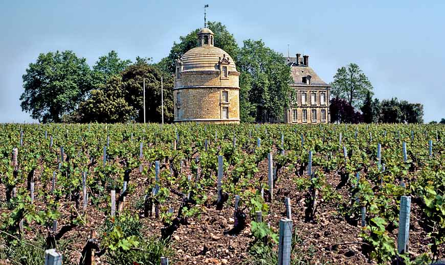 Chateau Latour vineyard